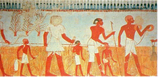 Measuring and recording the harvest is shown in a wall painting in the tomb of Menna, at Thebes (Eighteenth Dynasty).