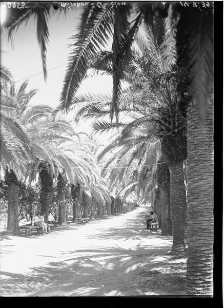 שדרת הדקלים, 1939