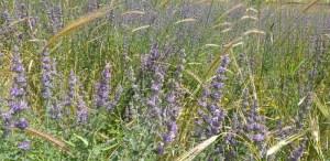פרחי אביב - תל חנתון