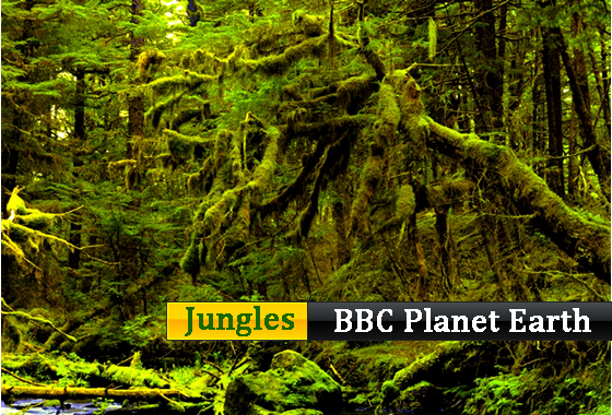 BBC - Planet earth - Jungles