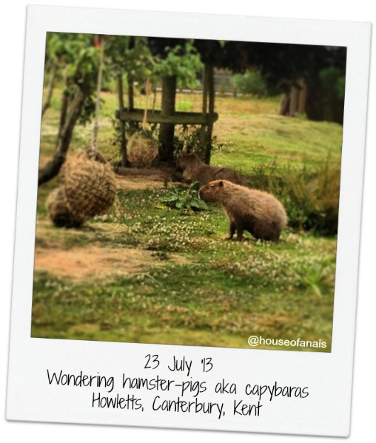 23 July_Howletts