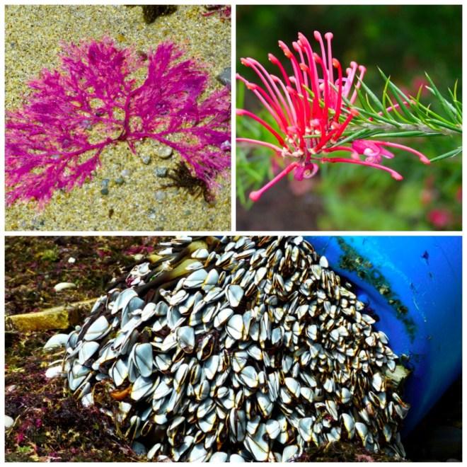 Asturias Nature Collage
