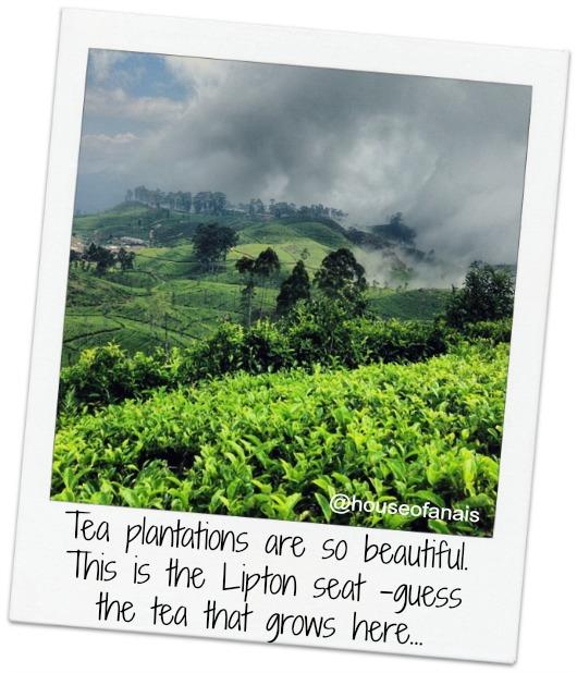 Lipton Seat Tea