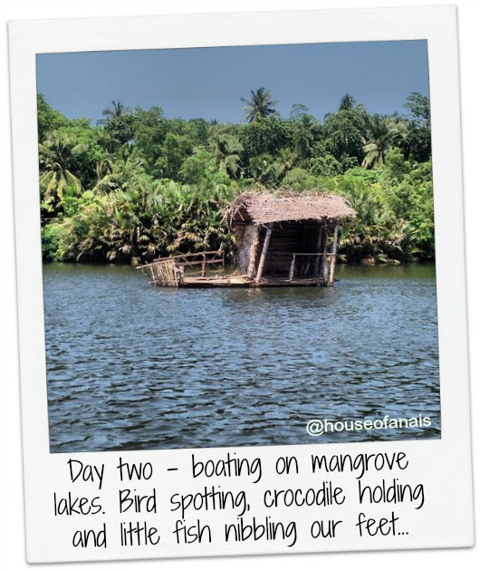 Mangrove lakes