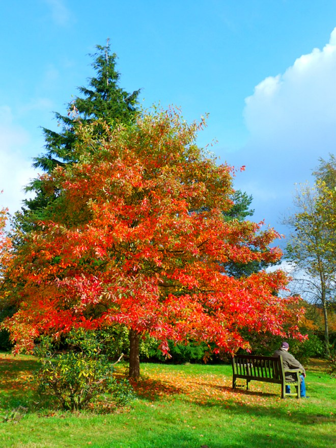 Foliage in Emmetts Garden