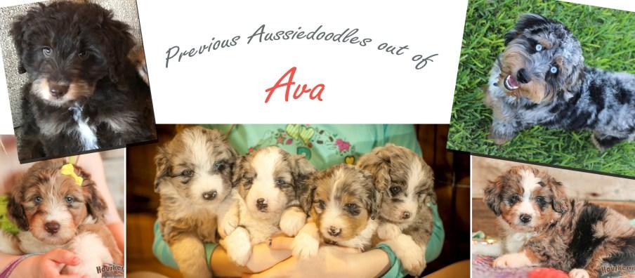 Ava_Puppies