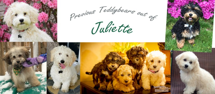 juliettes_Puppies-Recovered