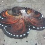 Street Octopus
