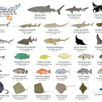 fishes and names - Fish Photos And Names Fishes Names