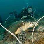 Hua Hin Divers – Scuba Diving
