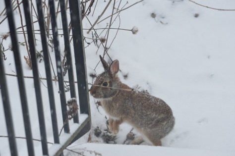 Image of rabbit near front steps in snowstorm