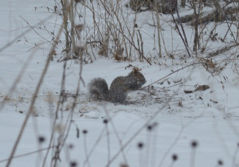 Image of squirrel eating birdseed
