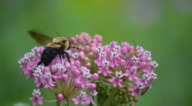 The Value of Pollinators? Priceless