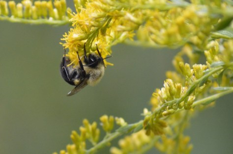 Image of sleeping bumblebee