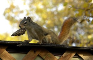 Image of squirrel on roof