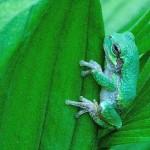 Image of frog in Lisa Taft's garden