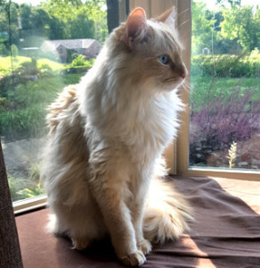 Castiel Cat on window seat_Paige Nugent
