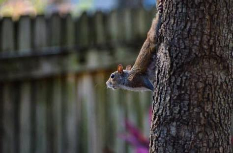 Image of squirrel in Illinois