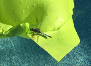 Image of Dragonfly on pool float