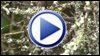 Hummingbird recycles nest