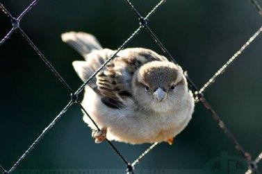 sparrow034176