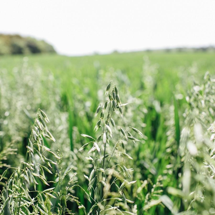 mcclellandfarm_1