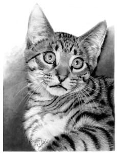 Фотореалистичные рисунки простым чернографитным карандашом Linda Huber