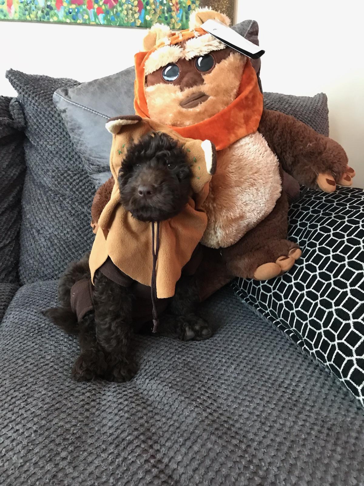 Return of the Ewoks