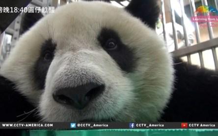 Panda_00_00_38_17_Still002