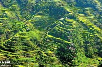 Banaue-Rice-Terraces-View