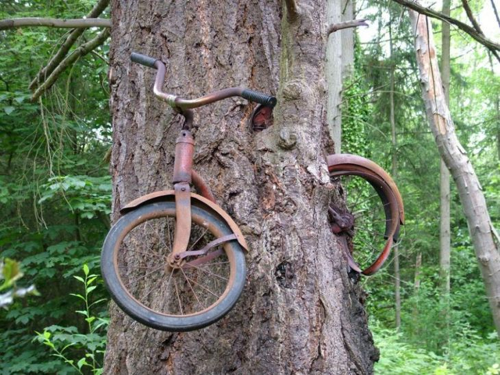 Bike_Inside_Tree_by_sushi_robots