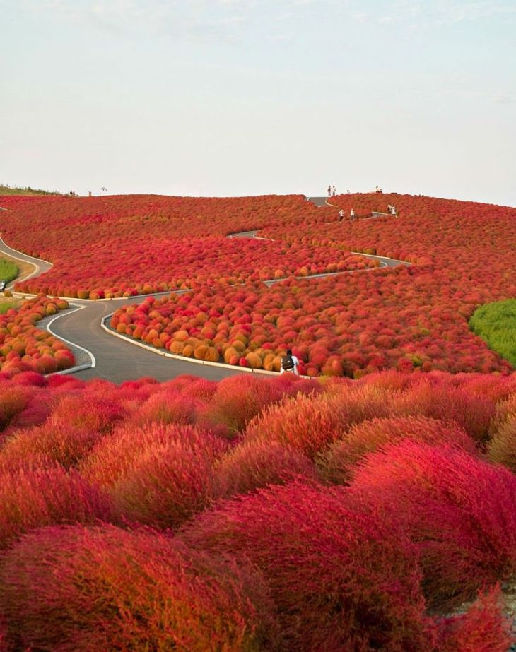13- Hitachi Seaside Park (Japan)