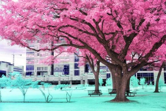 Infrared-Photography-11-600x400