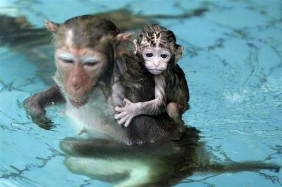 swimming-with-animals02