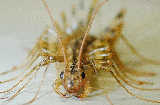 10-fastest-house-centipede