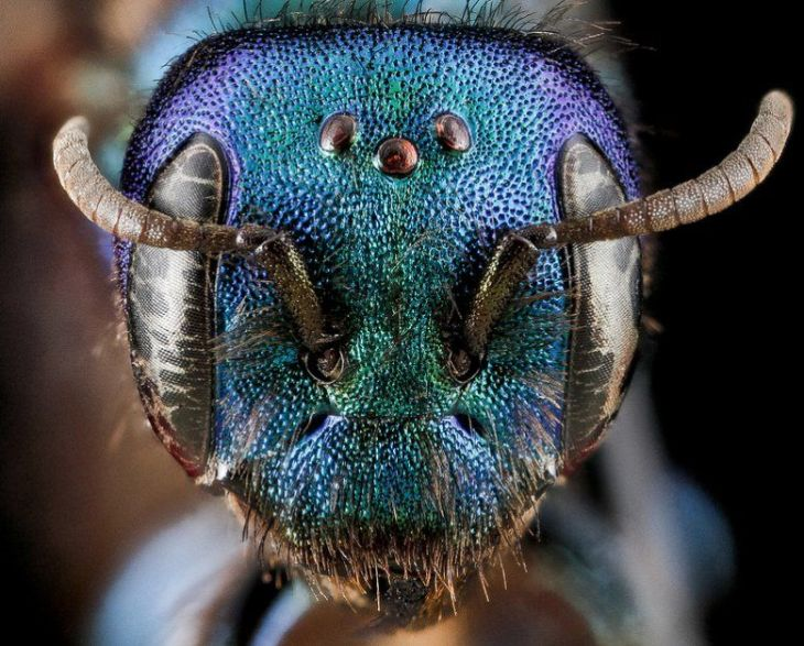 insects-glittering-jewel-670-1