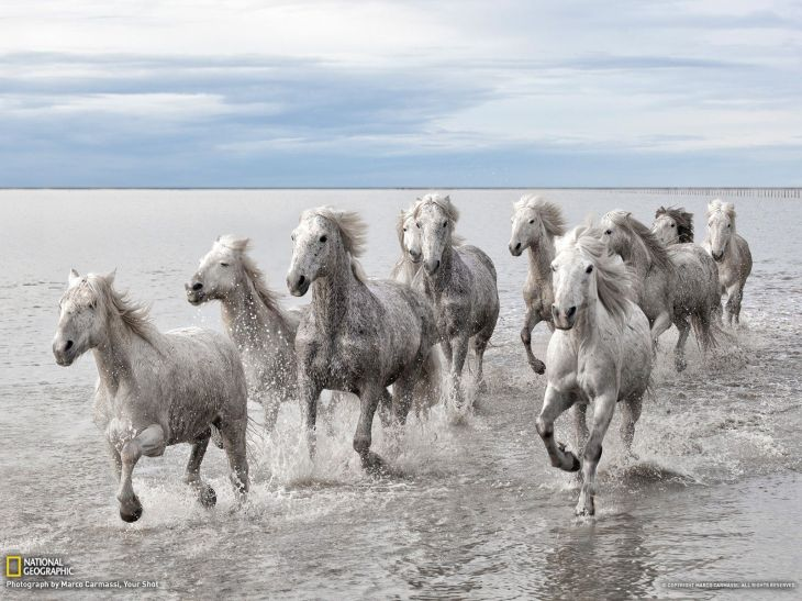wild-horses-picture-animal-national-geographic_646105