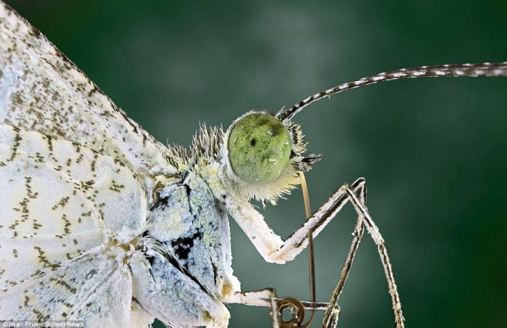 1404469017773_Image_galleryImage_These_insects_look_like_