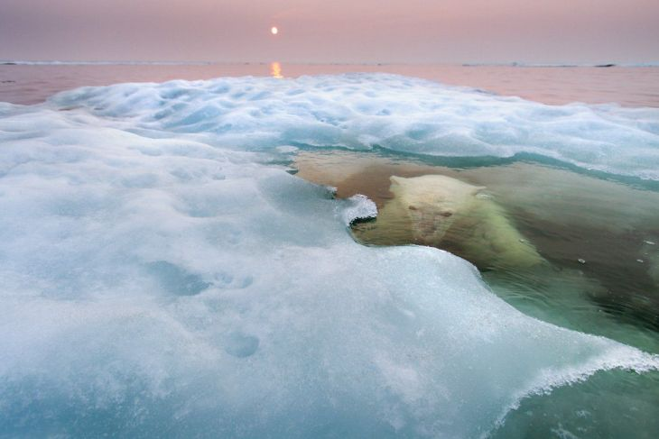 the-water-bear--american-paul-souders-took-his-zodiac-boat-to-hudson-bay-in-canada-during-mid-summer-and-waited-patiently-for-this-polar-bear-first-spotted-on-sea-ice-about-30-miles-offshore-to-slip-into-the-water