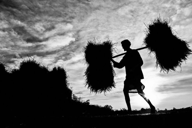 finalist-this-man-lives-in-a-small-village-in-tripura-india-making-a-living-by-working-on-others-fields-or-cultivating-his-own-small-crop-here-he-carries-a-bundle-of-his-own-crops