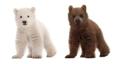 Polar-Bear-Baby-and-Grizzly-Baby
