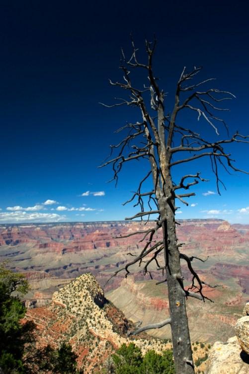 Views of Grand Canyon (SB)