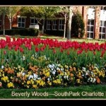Beverly Woods (SouthPark Neighborhood) Market Report March, 2016
