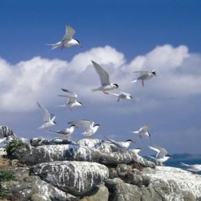 Wow! Taiwan: Matsu Tern-Watching Tour