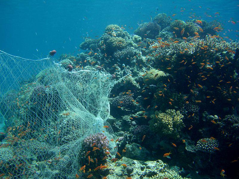 coral reef fishing net
