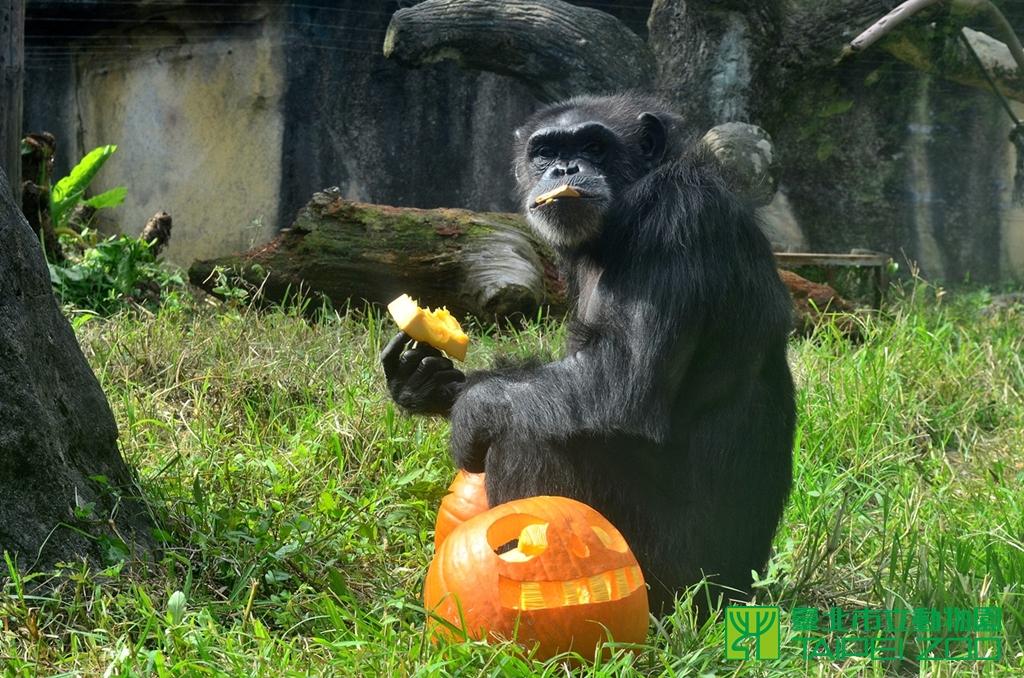 Taipei Zoo Halloween pumpkin