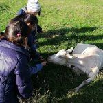 """Esploriamo, """"sperimentiamo"""" il lavoro in campagna e incontriamo gli animali."""