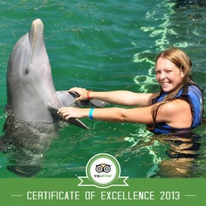 Excellence Dolphin Swim Punta Cana