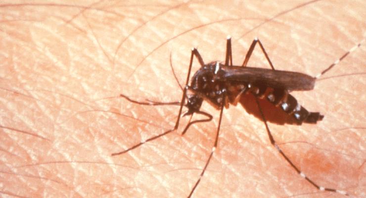 Mosquito da espécie 'Aedes aegypti', transmissor do vírus Zika