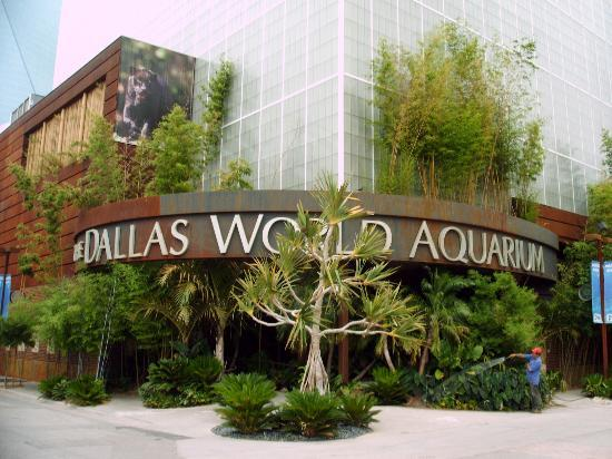 Dallas Aquariums: Excellent for Exploring Marine Life
